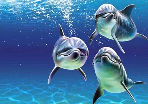 """活泼可爱的海豹,海豚""""演员""""为你表演顶球,滑板等精神节目,让人忍俊"""