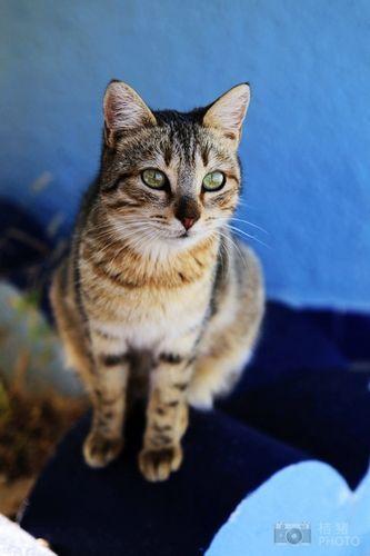 猫咪控的旅行探访全球萌猫聚集地(组图)