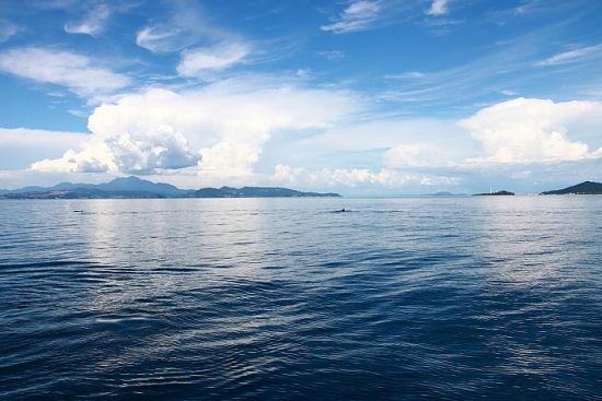 碧海蓝天乘船出海实拍可爱的野生海豚(组图)