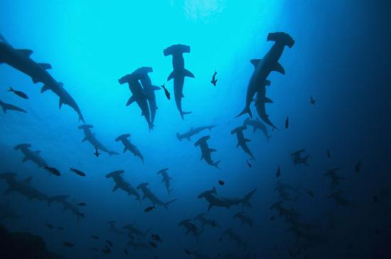 组图:与鲨鱼亲密接触 这些细节你一定没见过