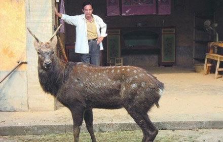 梅花鹿是国家一级保护动物-梅花鹿现身南康市村庄 图