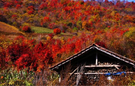 临江花山风景区
