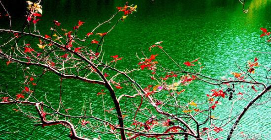 赣州陡水湖枫叶染红了半边天