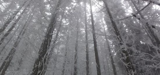 武功山杉树林