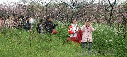 桃花岛位于赣县湖江乡洲坪村,距县城30公里,一条宽6.