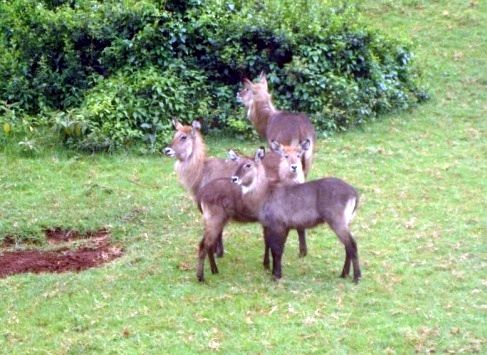鹿是几级保护动物