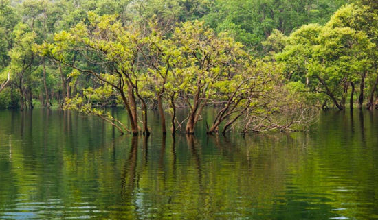 龙源峡景区在碧波万顷的庐山西海之畔; 江西四大天然氧吧 东方亚马逊