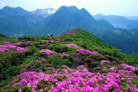 4月江西赏花最佳地看井冈山独有的六种杜鹃花