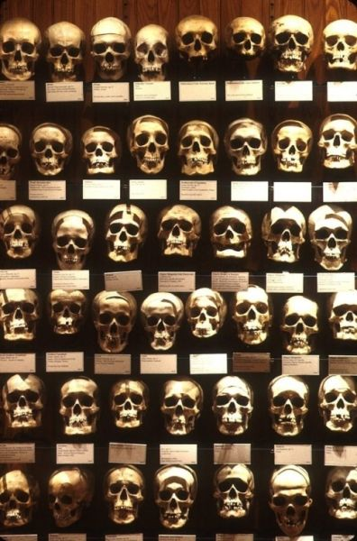 全球九大最古怪收藏奇特集锦VS粪便博物馆