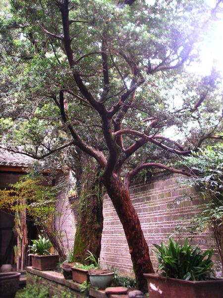 院内古树; 千年客家第一古村——赣县白鹭;
