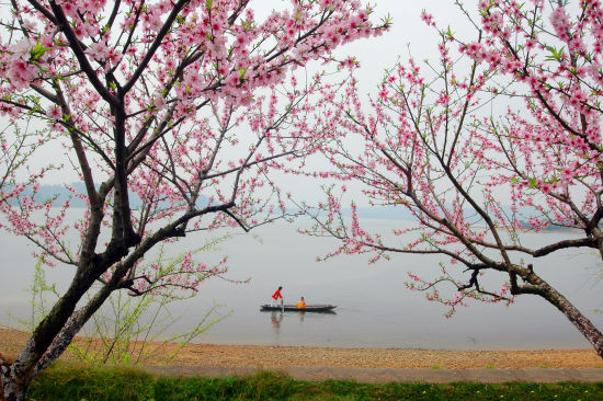 仙女桃花图片手绘