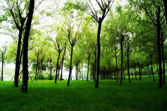 立体的森林湿地体系