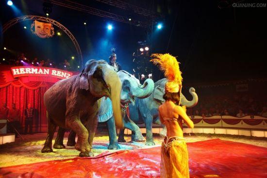 憨态可掬的大象