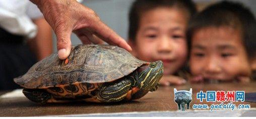 龟甲缚男生教程图解
