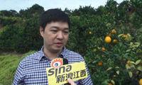 罗沪京:催熟染色赣南脐橙是个别形象