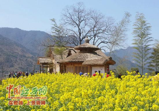 篁岭油菜花吸引了众多游客纷至沓来。(本组图由篁岭景区提供)