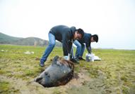 鄱阳湖边发现江豚尸体