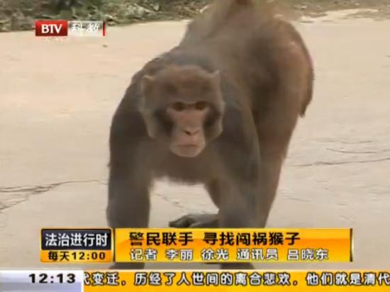 实拍顽猴进城区大闹咬人 警民联手捉拿
