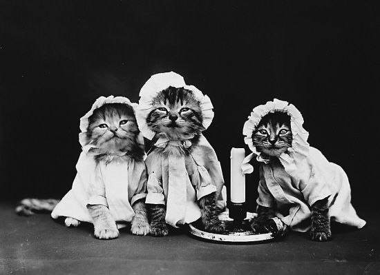 穿越百年的宠物卖萌照