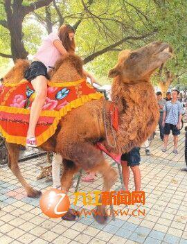市民骑骆驼拍照。
