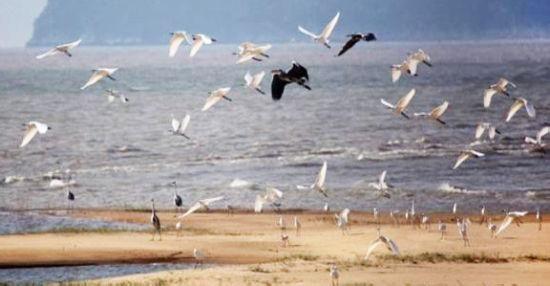 泗山候鸟保护区