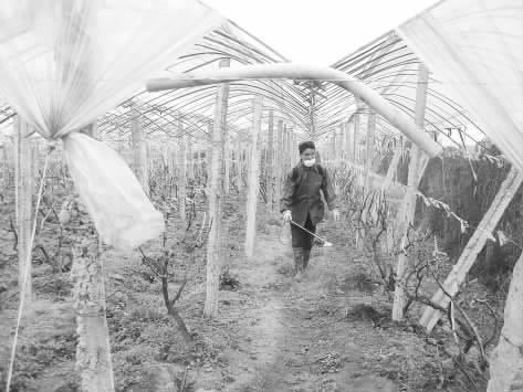 土地发展生态葡萄产业