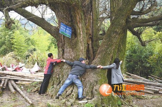 夏天树下没有蚊蝇,当地村民们最爱在树下纳凉