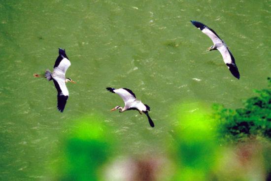 别样湿地风景 鄱阳湖国家湿地公园游玩攻略
