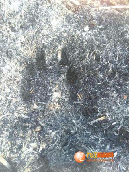 村民拍摄的不明动物脚印