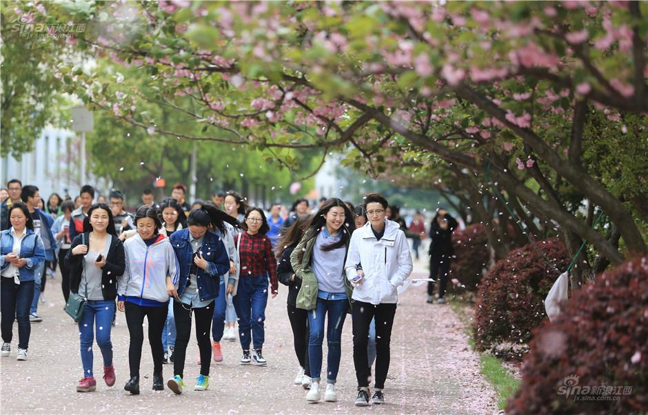 九江学院樱花迎春