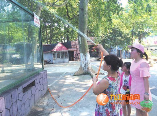 7月25日,浔阳晚报记者探访甘棠公园动物园了解到,为让动物们舒服
